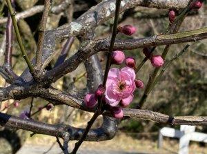 都会のオアシス 小石川植物園のサムネイル画像