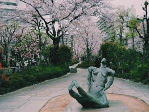 播磨坂(はりまざか)は桜の名所のサムネイル画像
