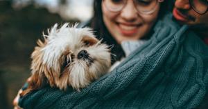犬が人間にもたらすメリットのサムネイル画像